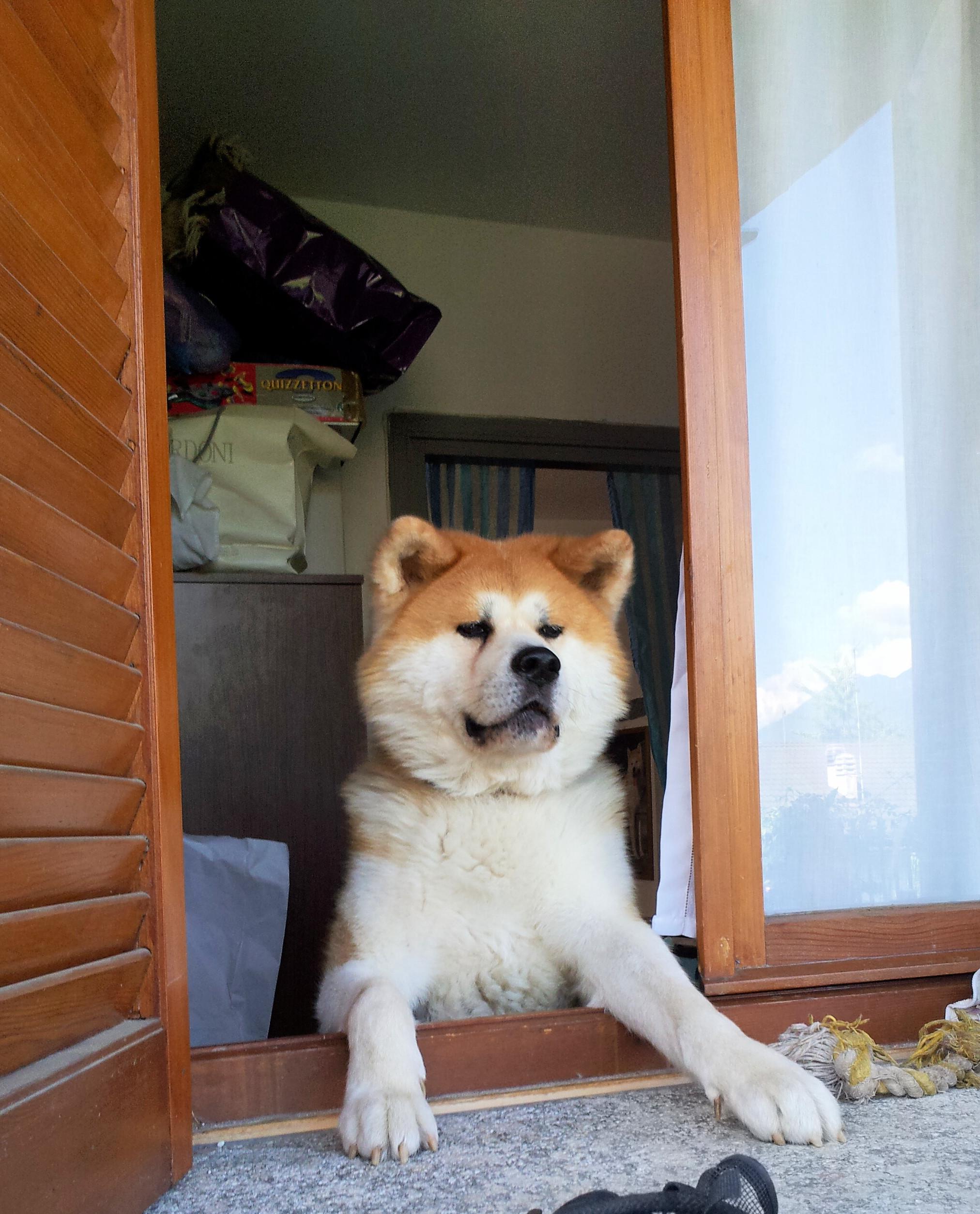 Affacciati alla finestra kumatani kensha - Jovanotti affacciati alla finestra ...