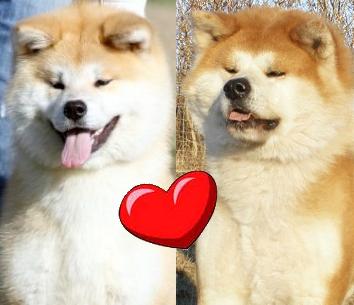 Taiyoo x Akemi