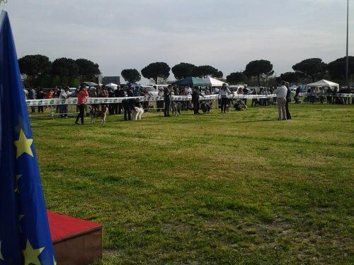 Esposizione Nazionale di Ravenna – 25 Aprile 2013