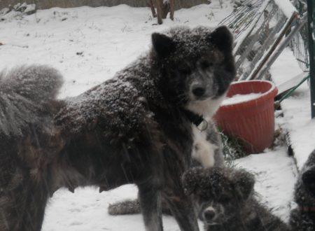 Giorni di neve….