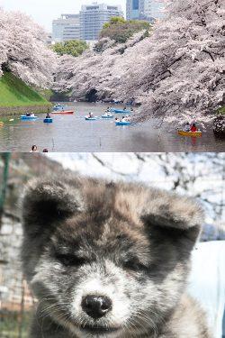 Tigrati – Fiumi del Giappone