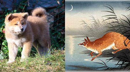 La cucciolata degli Animaletti – Cuccioli di Lupa