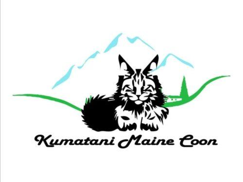 Non solo Akita… Anche Maine Coon!
